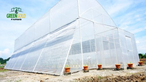 Greengold Farms Pampanga Greenhouse Design