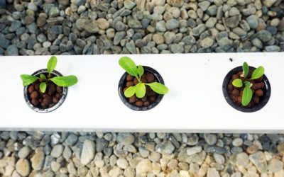 How To Grow Big Healthy Seedlings