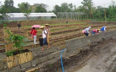 Traditional Open Field Farming vs Greenhouse Cultivation