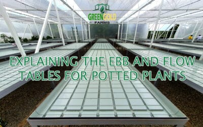 The Ebb and Flow System in a Greenhouse